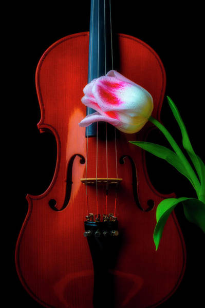 Photograph - Beautiful Tulip And Violin by Garry Gay