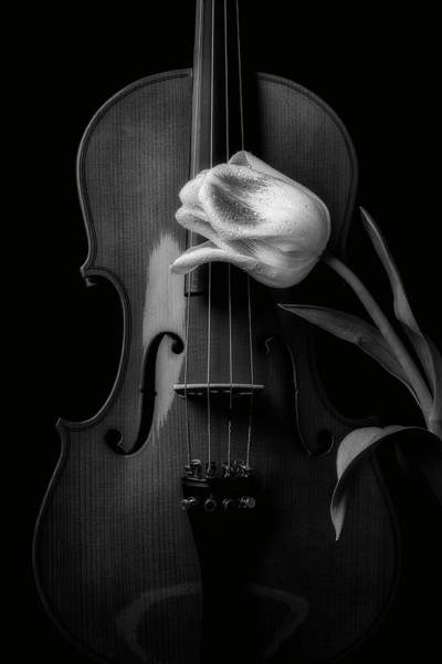 Photograph - Beautiful Tulip And Violin In Black And White by Garry Gay