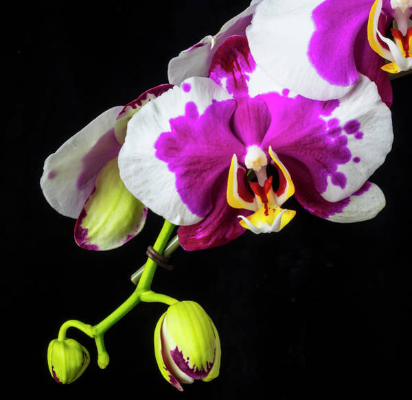 Wall Art - Photograph - Beautiful Unique Orchid by Garry Gay