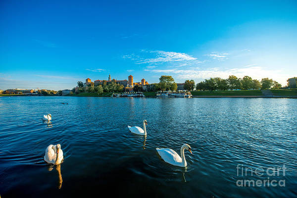 Swan Photograph - Beautiful View On Vistula River With by Rosshelen