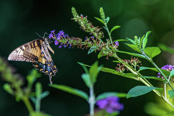 Wall Art - Photograph - Beautiful Visitor by Mary Ann Artz