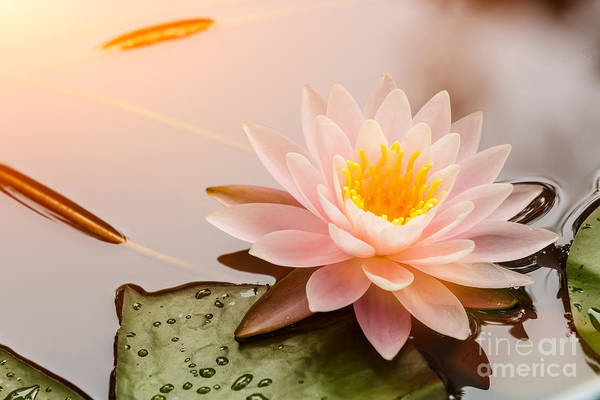 Wall Art - Photograph - Beautiful  Waterlily Or Lotus Flower by Zhao Jiankang