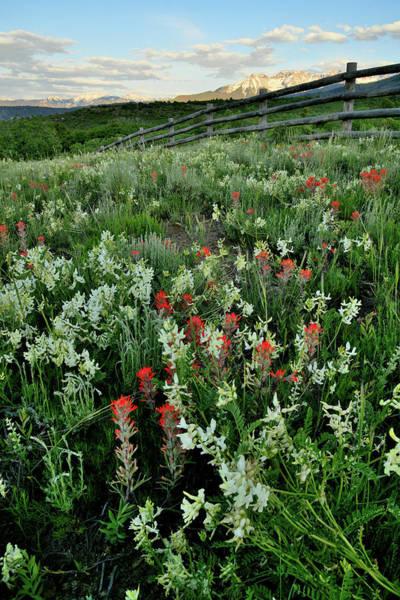 Photograph - Beautiful Wildflowers Near Ridgway Colorado by Ray Mathis