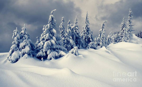 Wall Art - Photograph - Beautiful Winter Landscape With Snow by Creative Travel Projects
