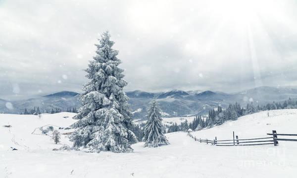 Beautiful Winter Landscape With Snow Art Print