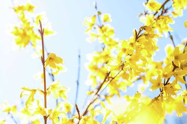 Photograph - Beautiful Yellow I by Anne Leven
