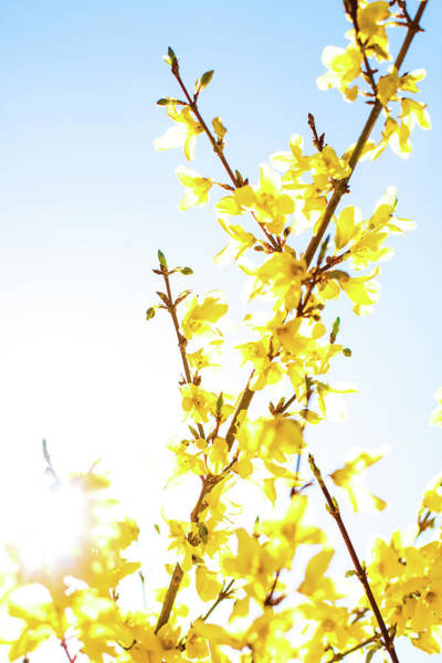 Photograph - Beautiful Yellow Iv by Anne Leven