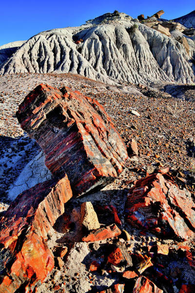 Photograph - Beautifully Colored Petrified Wood In Jasper Forest by Ray Mathis