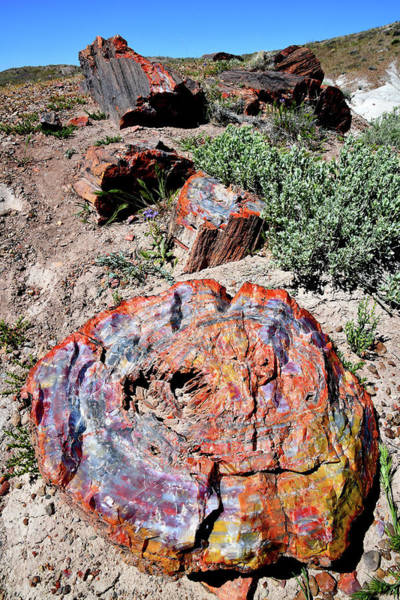 Photograph - Beautifully Colored Petrified Wood by Ray Mathis