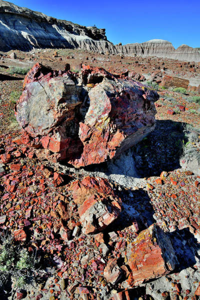 Photograph - Beautifully Colored Specimens In Petrified Forest Np by Ray Mathis
