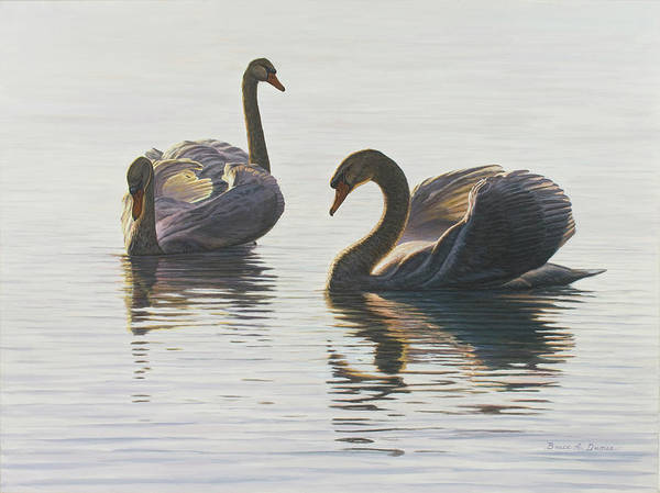 Trumpeter Swan Painting - Beauty And Grace by Bruce Dumas