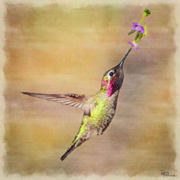 Photograph - Beauty In A Pause In Digital Watercolor by Rick Furmanek