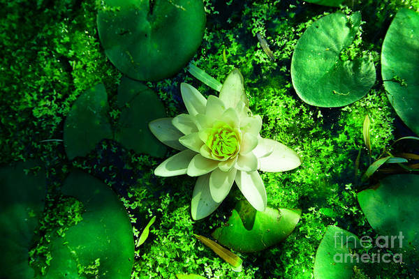 Wall Art - Photograph - Beauty In A Pond by Jeff Swan