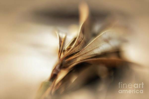 Photograph - Beauty In Dying by Mary Lou Chmura