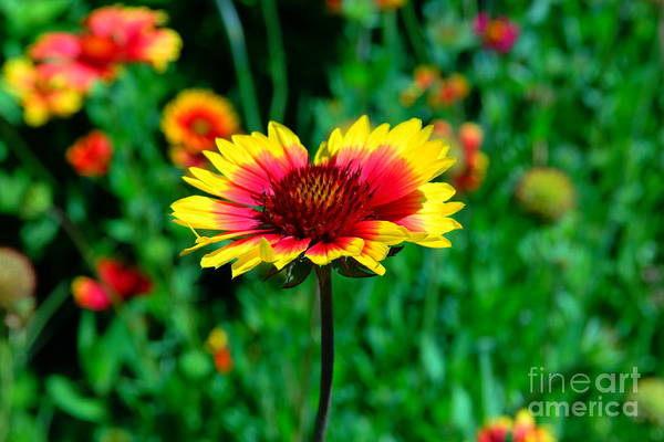 Wall Art - Photograph - Beauty In Red And Yellow by Jeff Swan