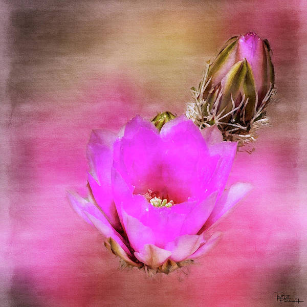 Photograph - Beauty In The Details In Digital Watercolor by Rick Furmanek