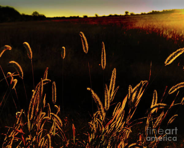 Photograph - Beauty In Weeds by Randy J Heath