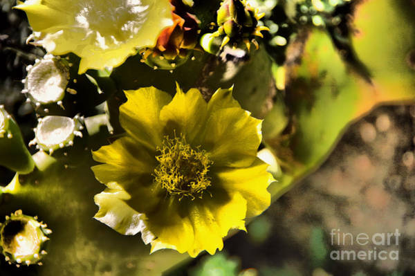Wall Art - Photograph -  Beauty Of A Shaded Flower by Jeff Swan