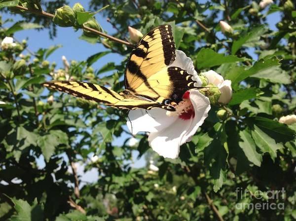 Wall Art - Photograph - Beauty Of A Swallowtail by Debra Lynch