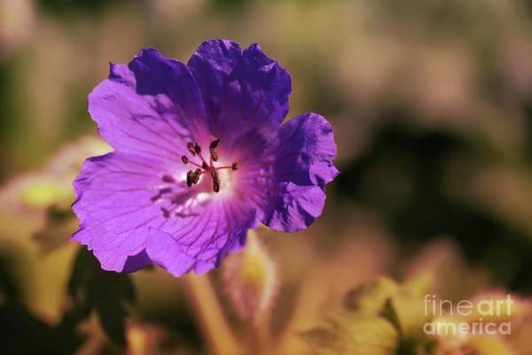 Wall Art - Photograph - Beauty Of One Sole Wildflower by Jeff Swan