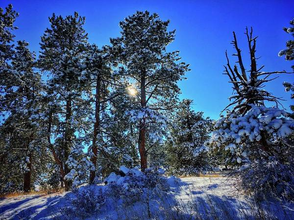 Photograph - Beauty Of Snow by Dan Miller
