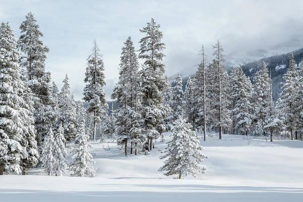 Wall Art - Photograph - Beauty Of The Season by Ann Skelton