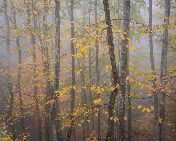 Photograph - Beautyfall by Suleyman Derekoy