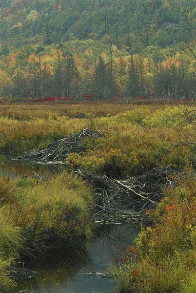 Wall Art - Photograph - Beaver Dam And Lodge by Michael Lustbader