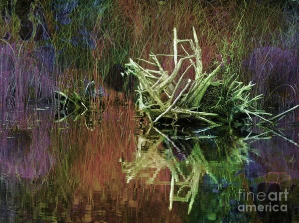 Photograph - Beaver House by Marcia Lee Jones