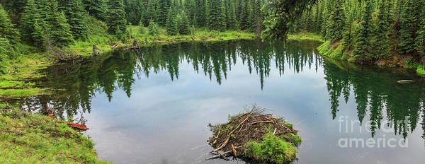 Wall Art - Photograph - Beaver Pond by Robert Bales
