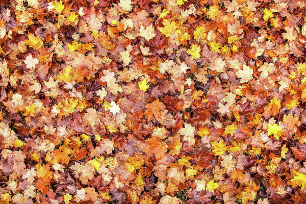Photograph - Bed Of Autumn Leaves by Todd Klassy