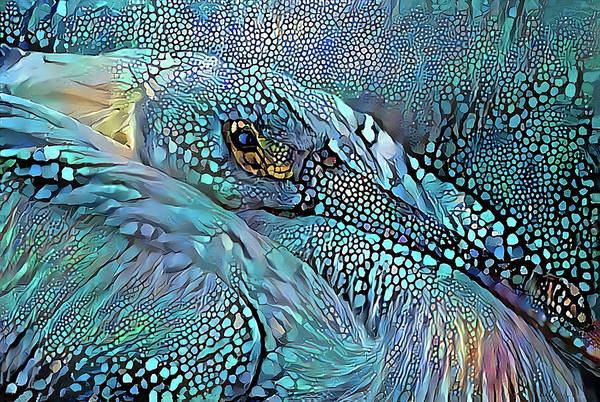 Wall Art - Photograph - Bedazzled Pelican by HH Photography of Florida