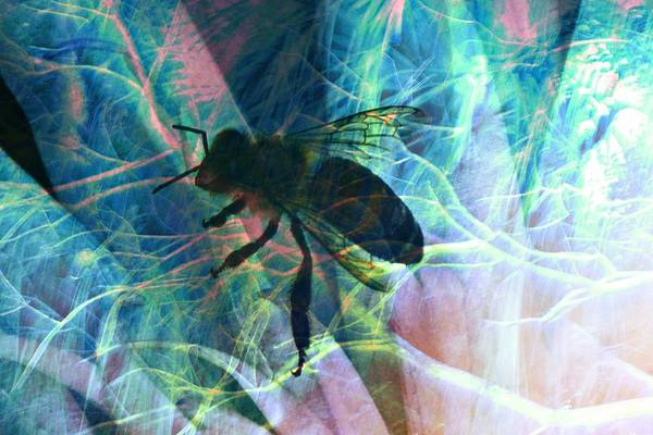 Photograph - Bee Abstract by Don Columbus