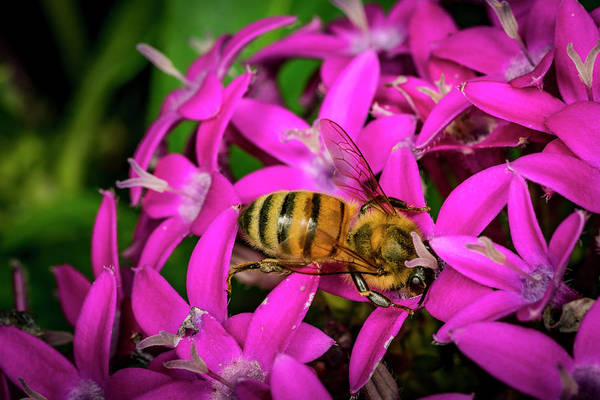 Photograph - Bee Beautiful by David Morefield