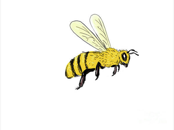 Wall Art - Digital Art - Bee Flying To Side Color Drawing by Aloysius Patrimonio