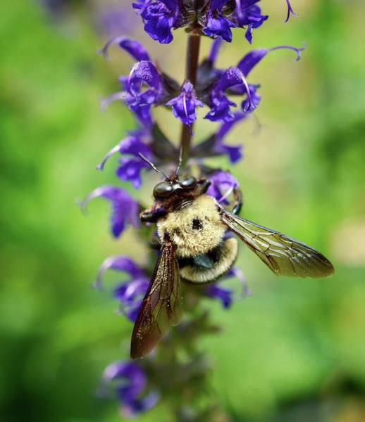 Photograph - Bee Free by Shannon Kelly