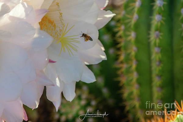 Wall Art - Photograph - Bee Heaven by Ann Loyd