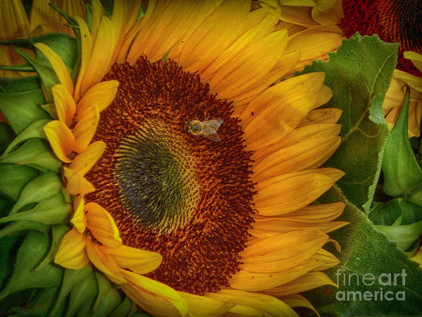 Photograph - Bee-ing Happy by Judy Hall-Folde