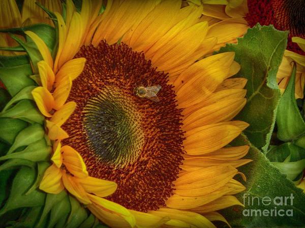 Photograph - Bee-ing Happy by Judy Hall-Folde