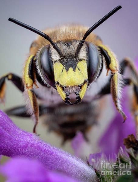 Photograph - Bee Inside Flower by Marco Fischer