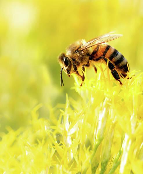 Photograph - Bee On Flower by Judi Dressler