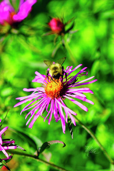 Photograph - Bee On Pink Flower by Meta Gatschenberger