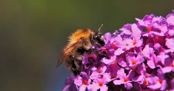Photograph - Bee On Pink Flowers by Eye to Eye Xperience