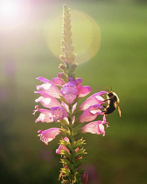 Bee On Flower Wall Art - Photograph - Bee On Purple Flower by Alissa Sanderson