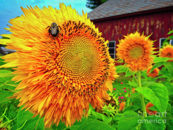 Digital Art - Bee On Sunflower by Dee Flouton