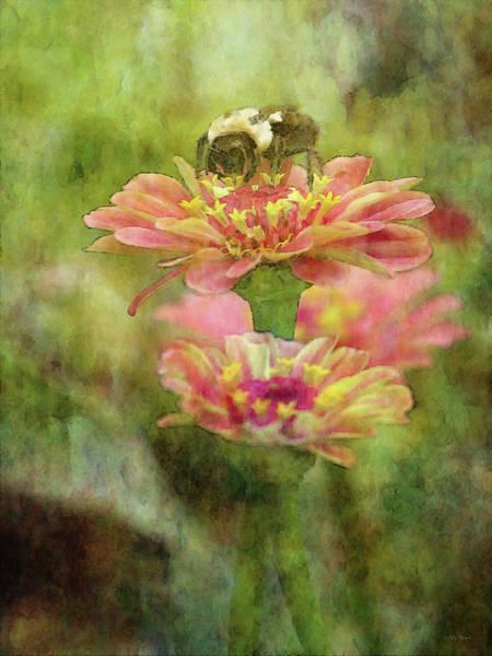 Photograph - Bee On Zinnia 4243 Idp_2 by Steven Ward