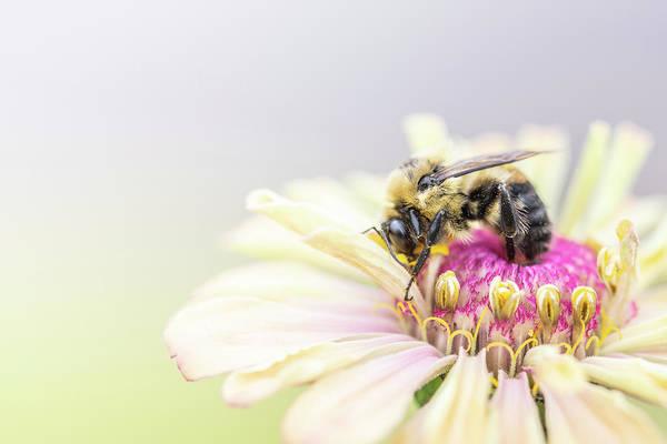 Wall Art - Photograph - Bee The Change by Matthew Blum