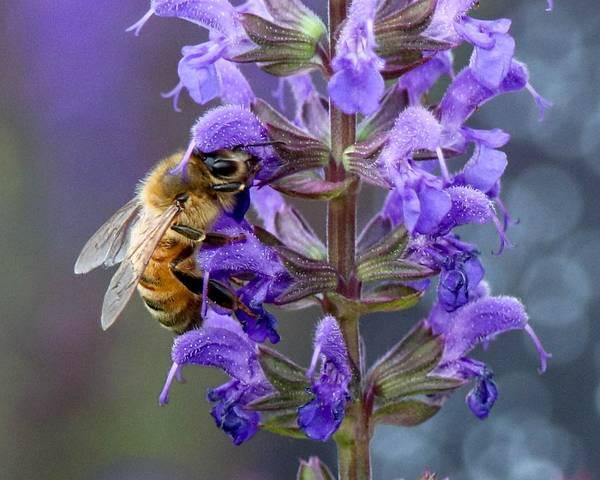 Wall Art - Photograph - Bee-utiful Pollinator by Susan Rydberg