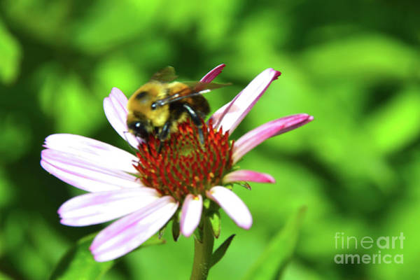 Photograph - Bee Wildly Happy by Robyn King