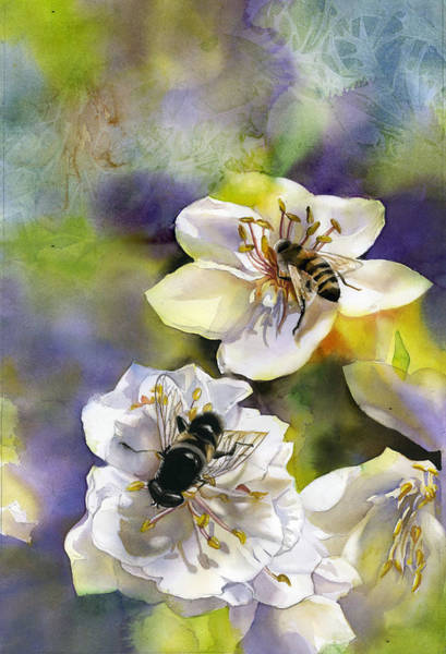 Painting - Bee With Pear Blossom by Alfred Ng